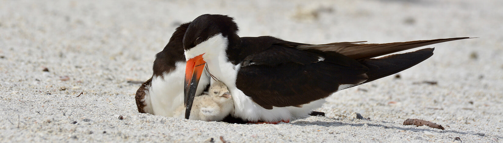 photo of a mother bird cuddling her chick